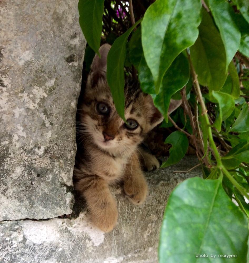 Photo in Animal #kitten #cat #myhappyphoto