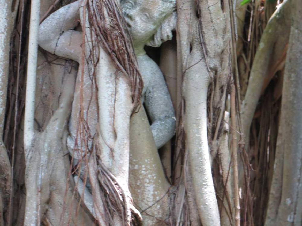 Photo in Nature #chereb #trapped #tree