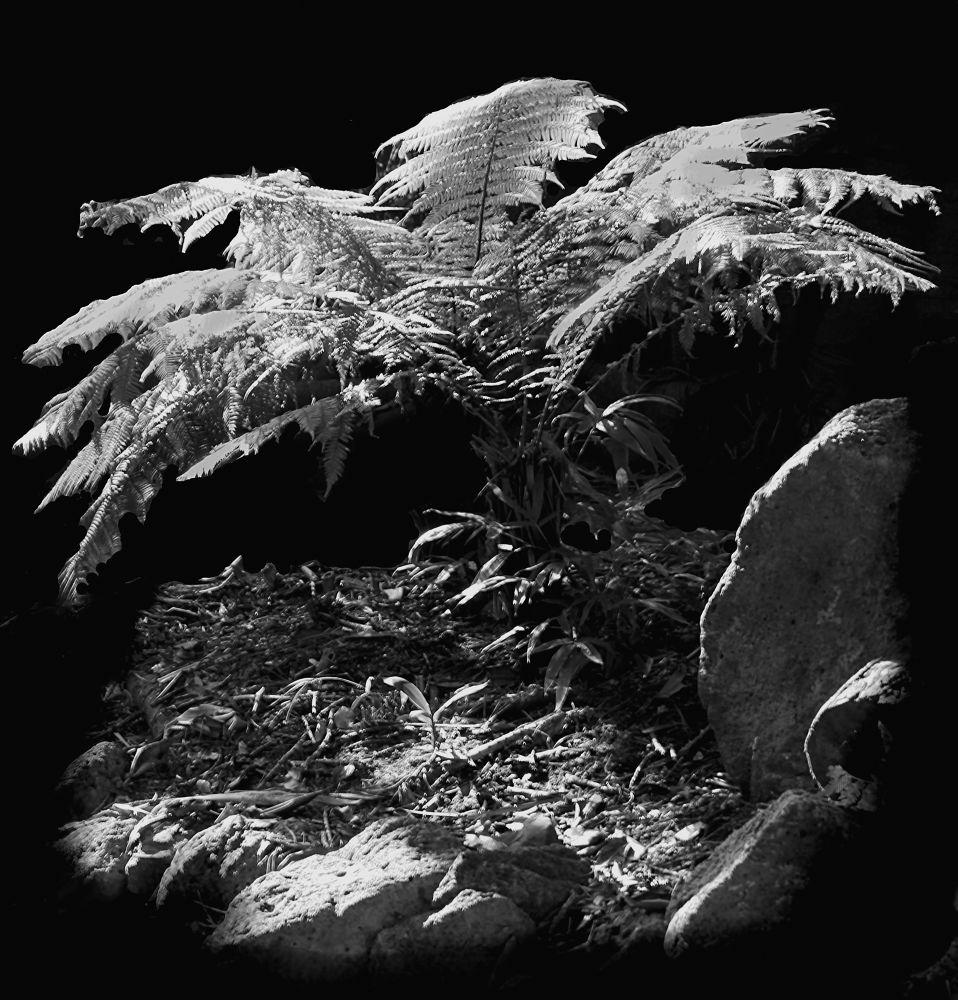 Photo in Nature #plant #fern #mono #nature