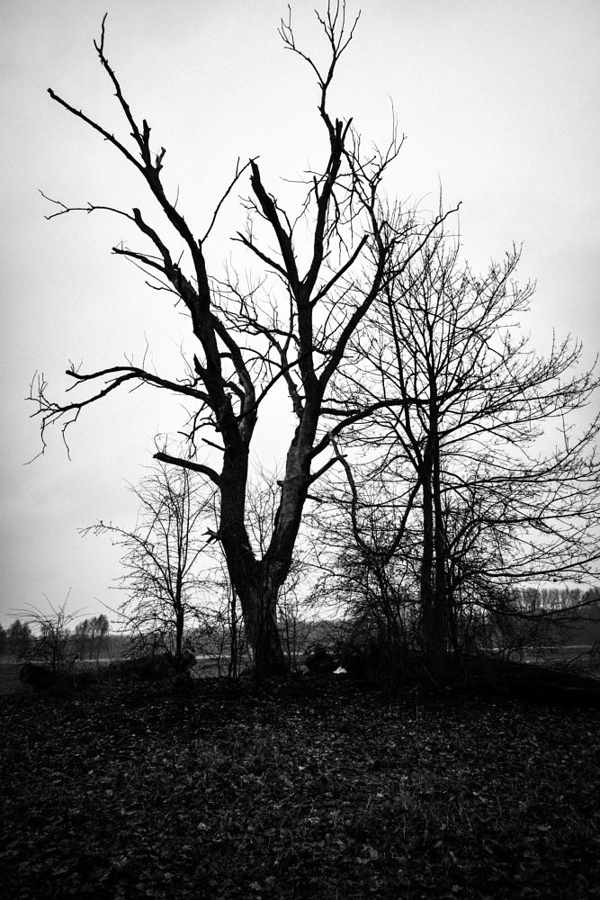 Photo in Black and White #leon #spilleart #tree #nature #black #and #white