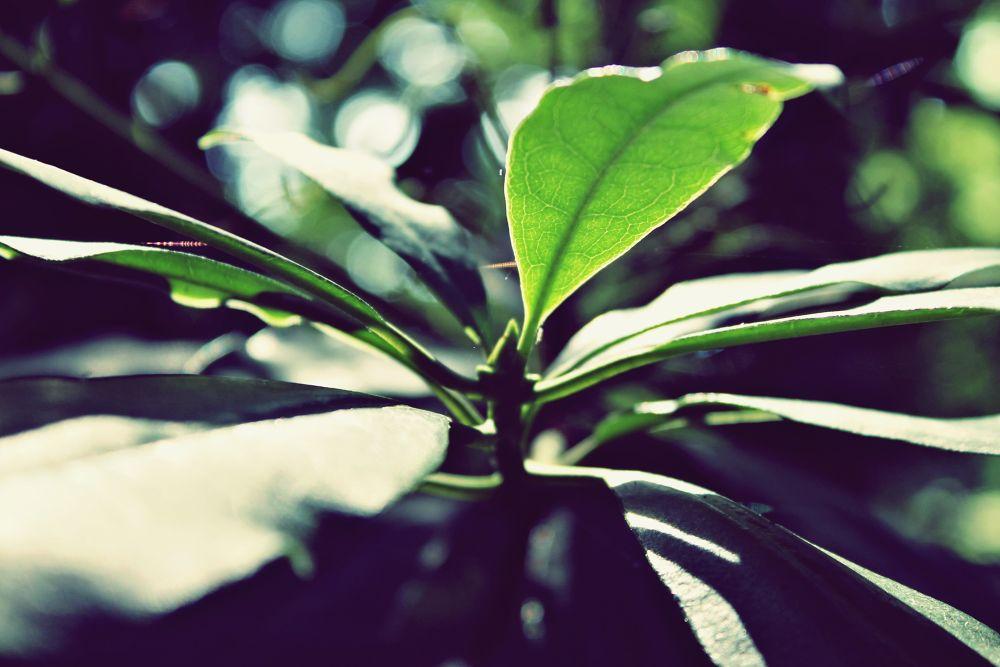 Photo in Random #plants forrest peace green