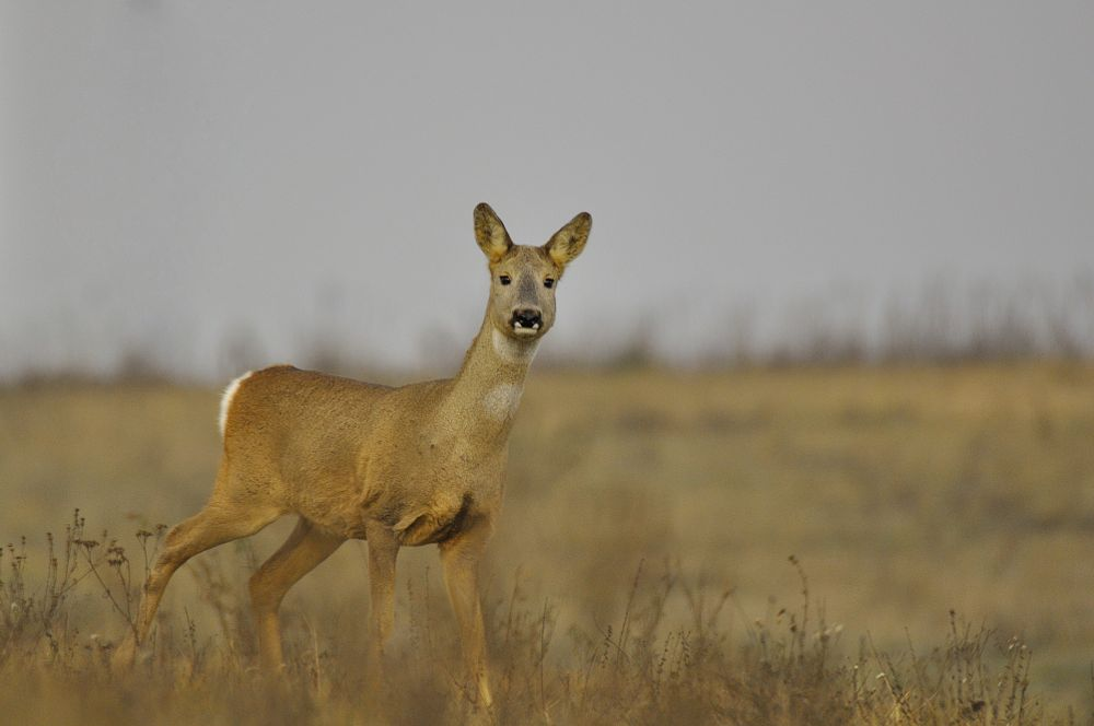Photo in Animal #deer #hunter #animal