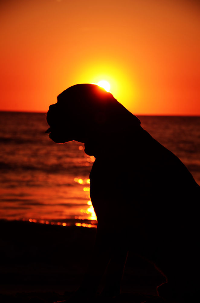 Photo in Random #ypa2013 #dog #sunset #sun #water #sea #warm
