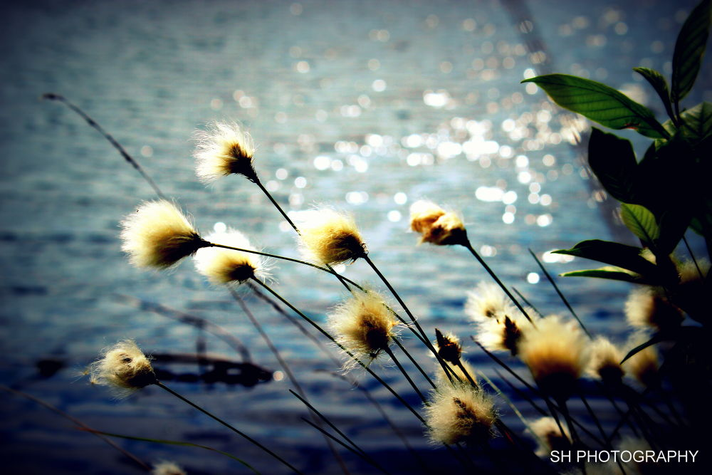 Photo in Nature #sea #flower #nature