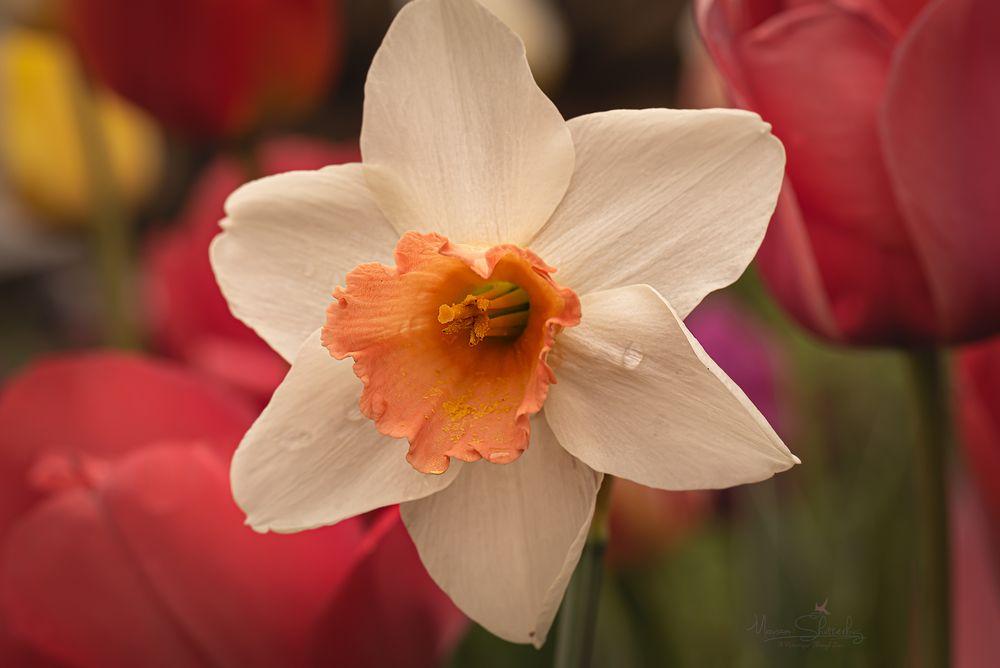 Photo in Macro #lightroom plugin #flowerphotography #nikon #d750 #macro #macrophotography