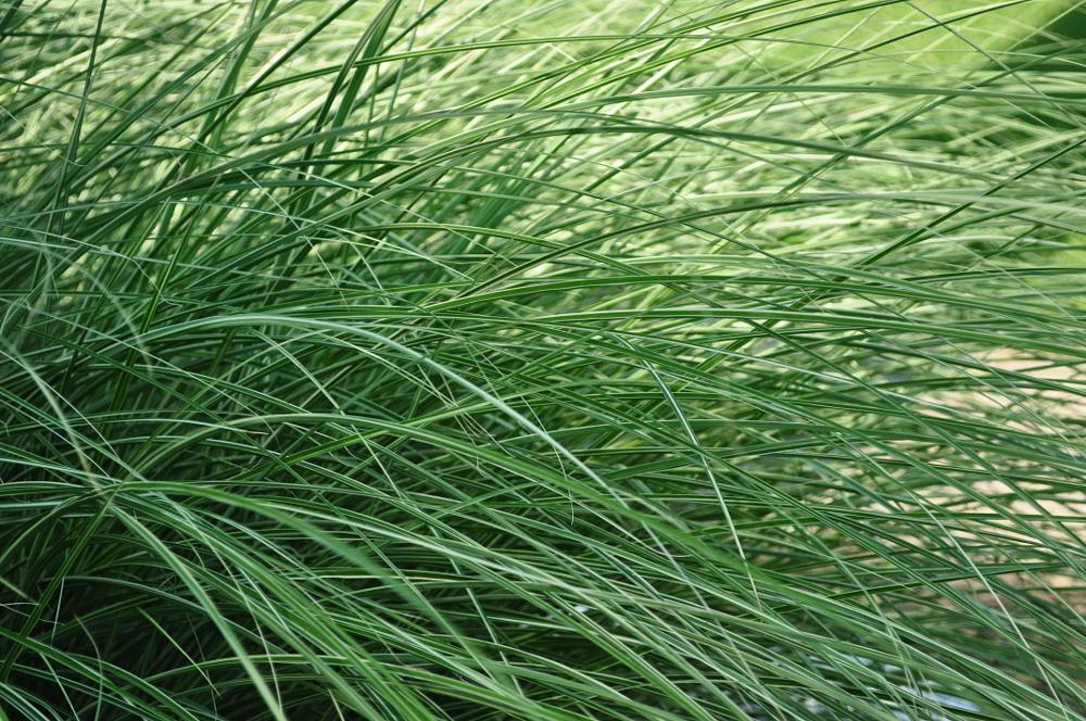 Photo in Macro #grass #nature