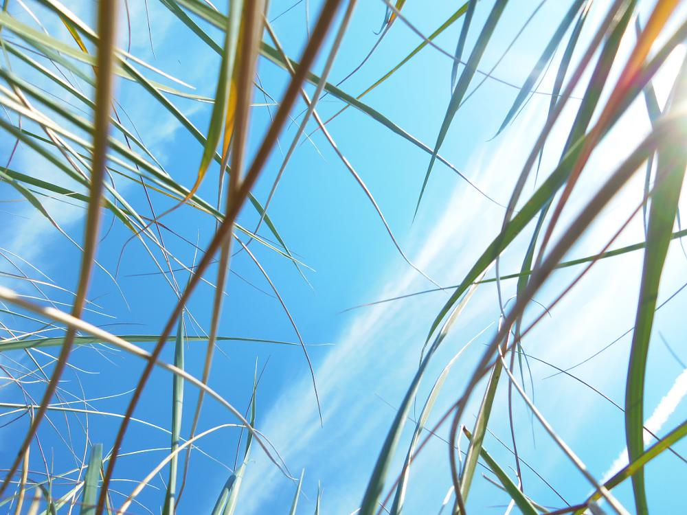 Photo in Nature #sky #grass #nature