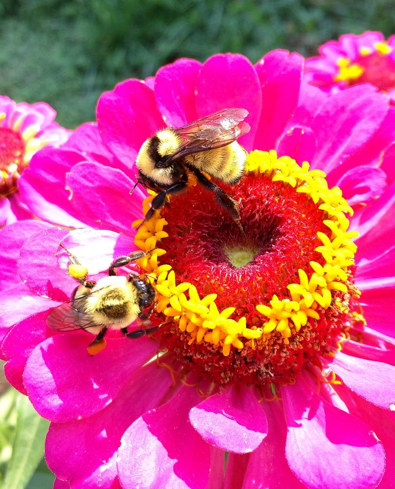 Photo in Nature #bees #nature #flower #google #android #nexus