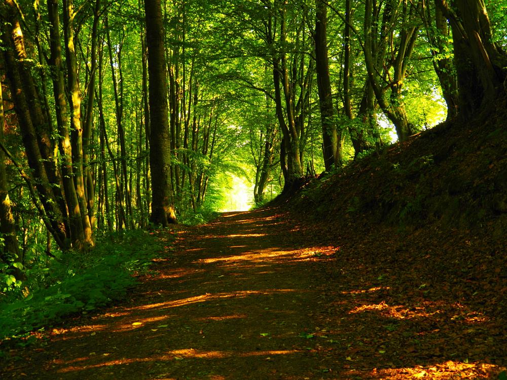 Photo in Nature #forest #nature #summer #forest track #available light #omd #olympus #brigitte bohlscheid