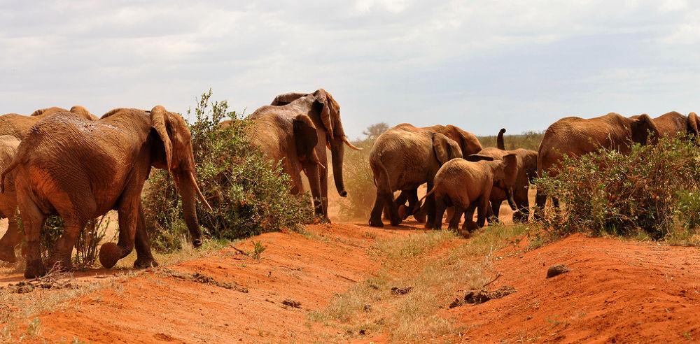 Photo in Random #elefanten