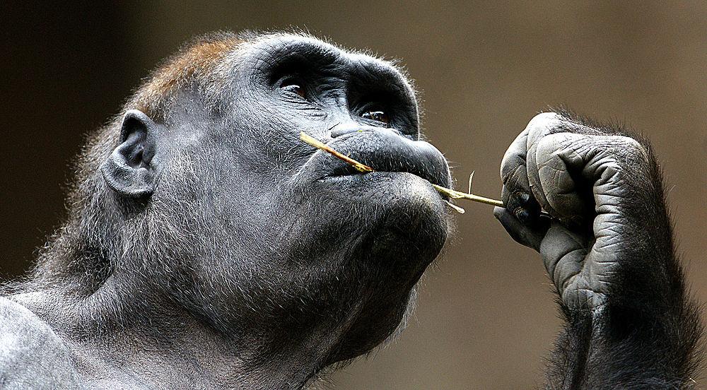 Photo in Animal #affen