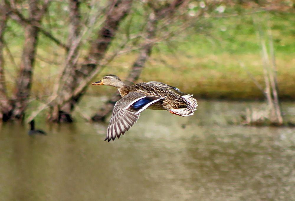Photo in Animal #bird #animalnature