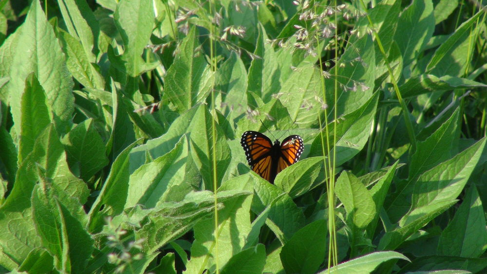 Photo in Random #butterfly #nature #awesome #bread