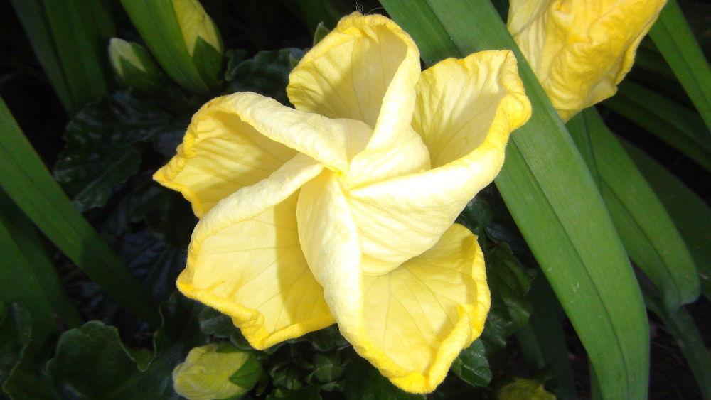Photo in Random #flower #star #nature #close