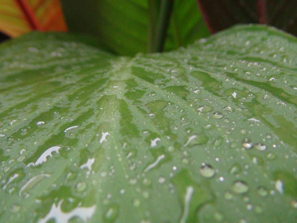 Photo in Random #water #drop #waterdrop #leaf #lov #life #rip