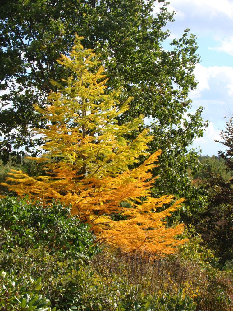 Photo in Nature #tree #fall #yellow #green