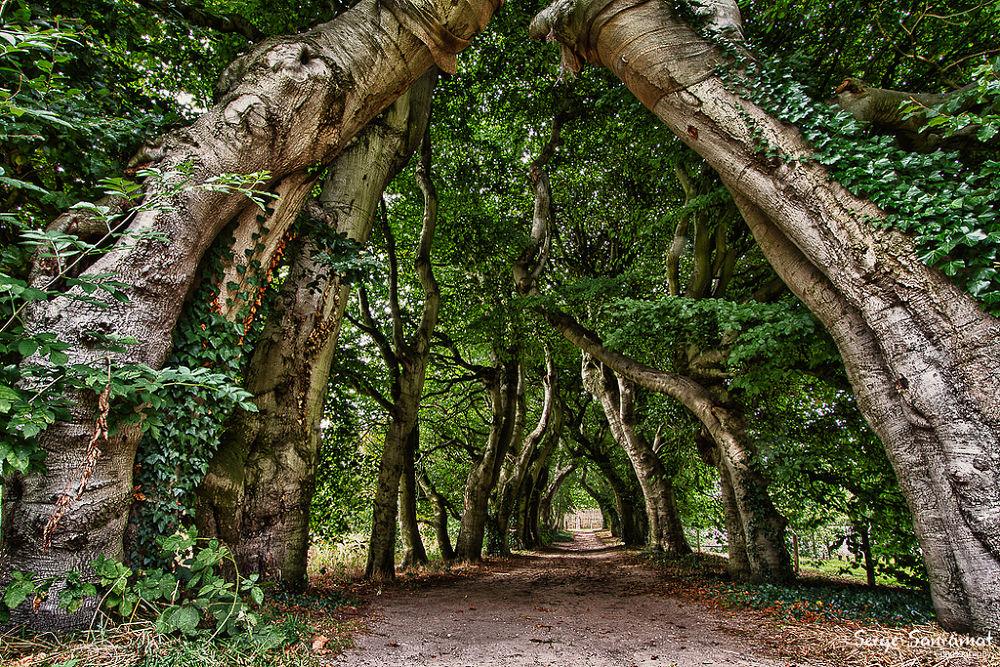 Photo in HDRI #green zone #tree