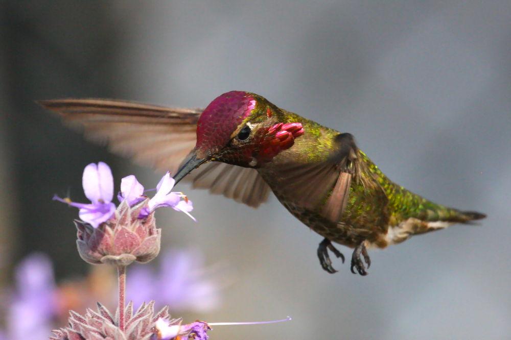 Photo in Random #hummers #hummingbird #birds in flight #hummingbirds in flight