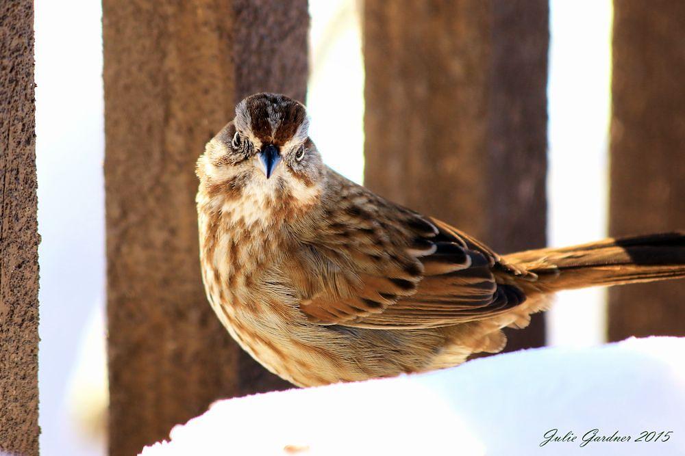 Photo in Animal #house sparrow #birds #wildlife