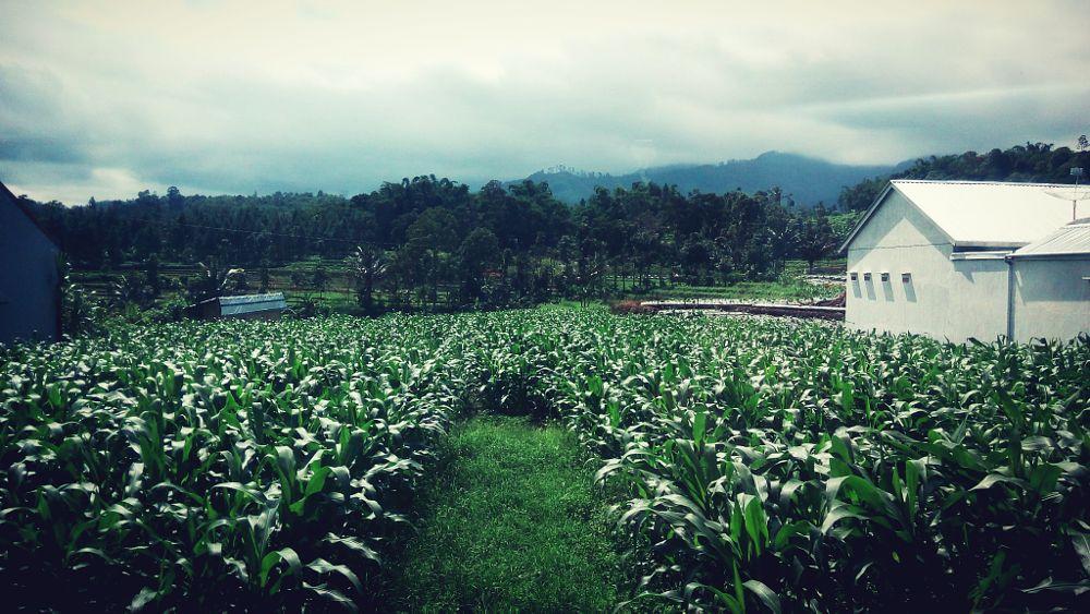 Photo in Random #jalanjalan #bertani #indonesiaku