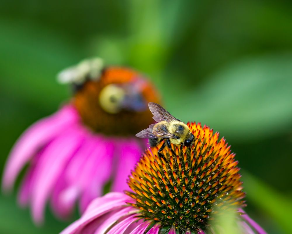 Photo in Random #bee #bees #freedom park #charlotte #north carolina #usa #flowers #nature