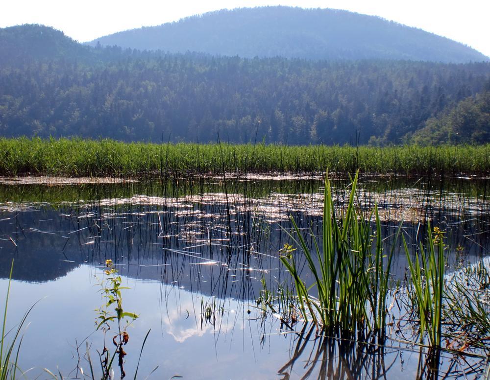 Photo in Random #slovenia #lake #beauty #nature #summer