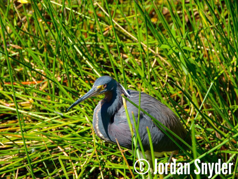 Photo in Animal #birds #florida #nature #wetlands #wildlife #color #animals #nikon