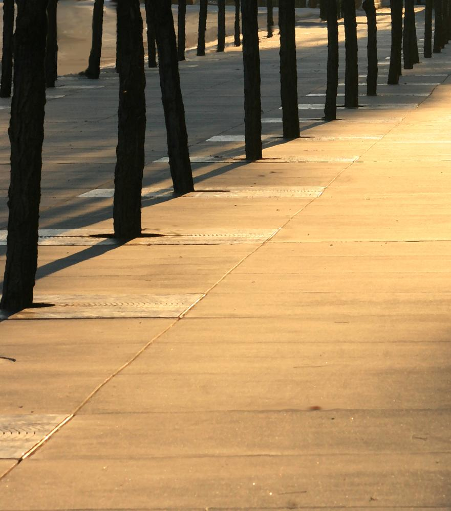 Photo in Random #sidewalk #trees #shadows