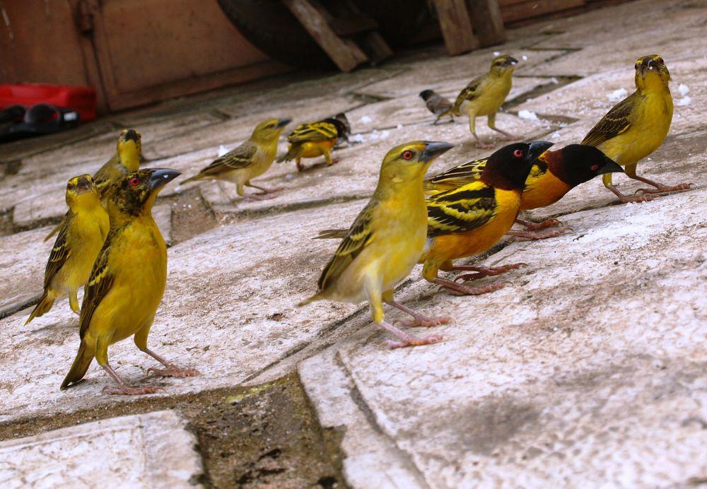 Photo in Animal #bird #flock #feeding #gang