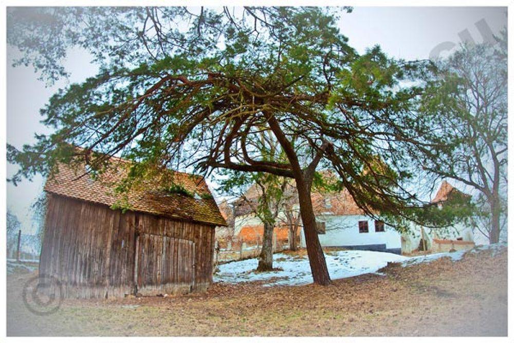 Photo in Random #www.cristiniculescu.com