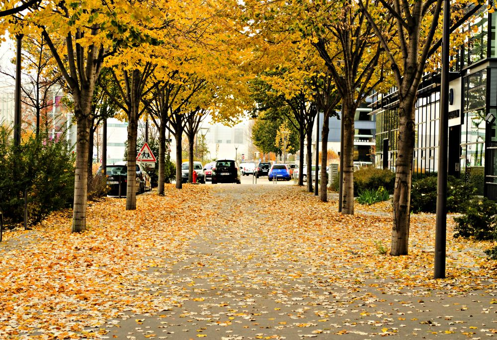Photo in Cityscape #street #tree #fall #leaves #yellow