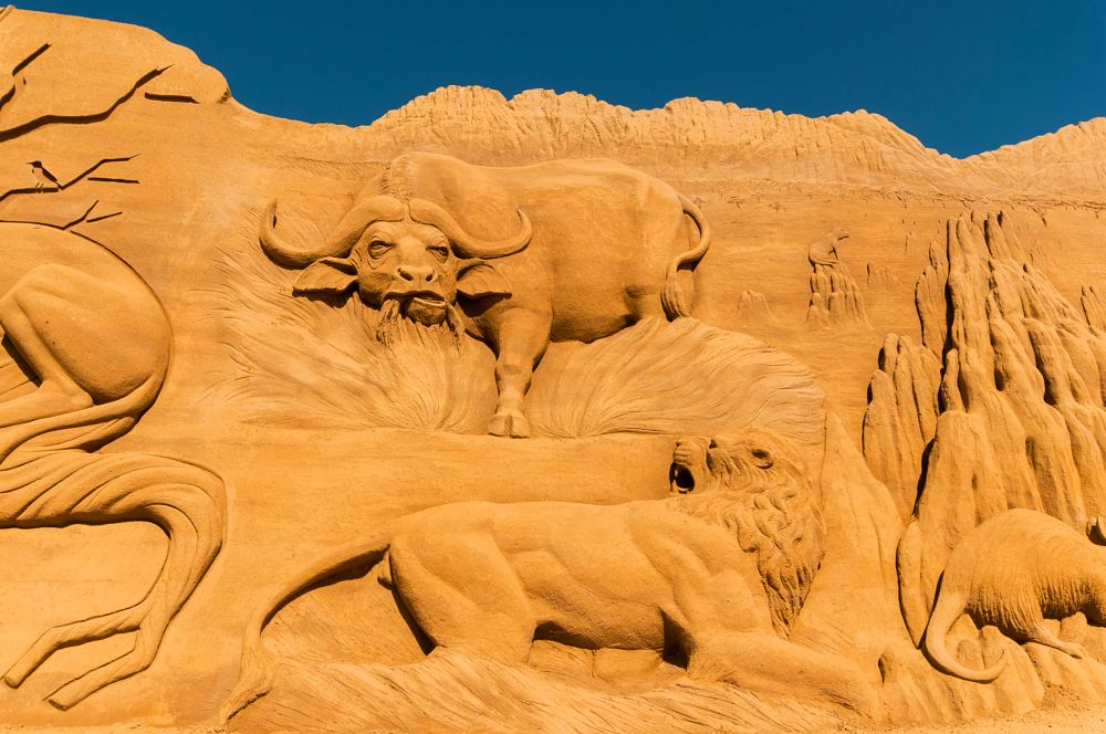Photo in Sea and Sand #water buffalo #lion #eating #sandsculpture #festival #2016