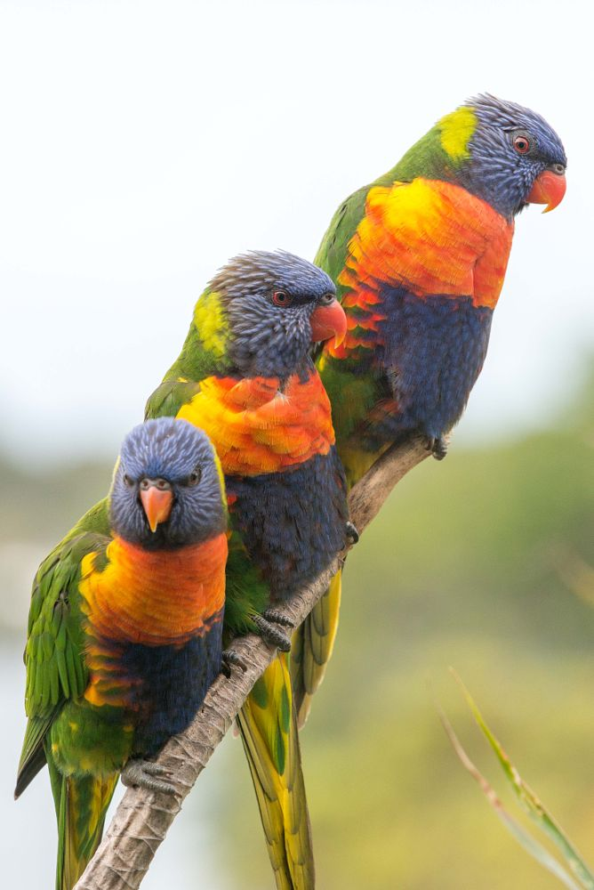 Photo in Nature #birds #rural #animals