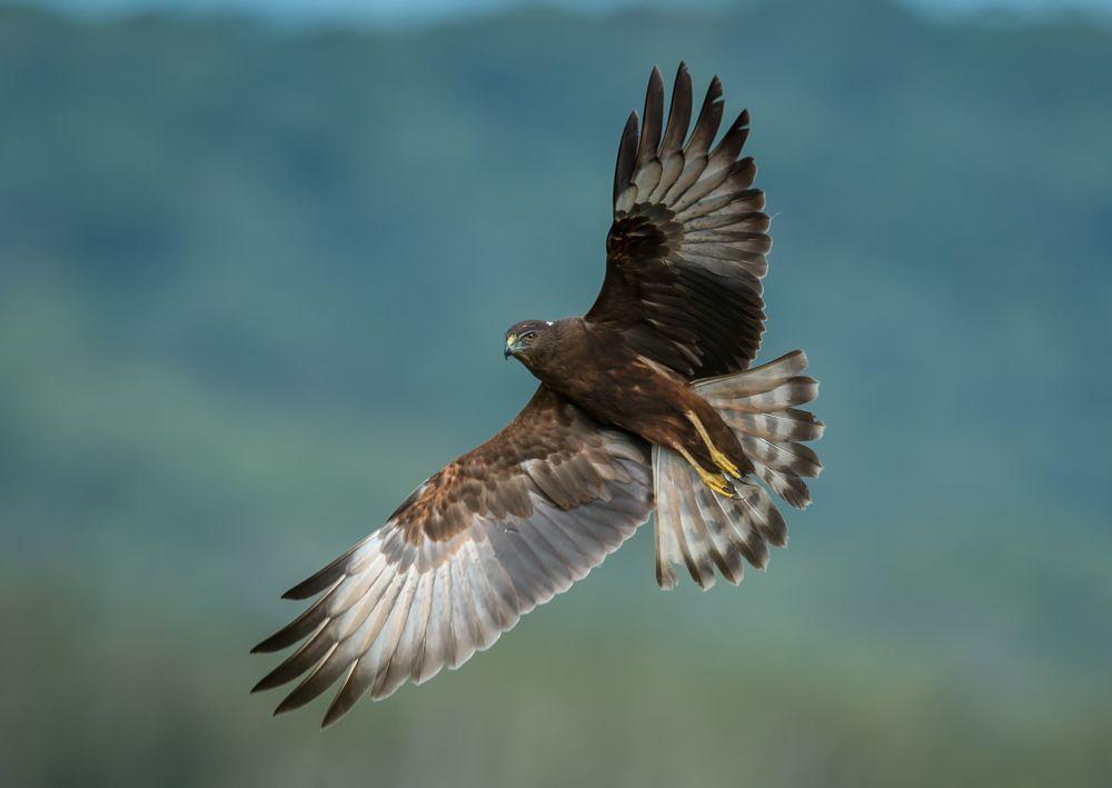 Photo in Animal #birds