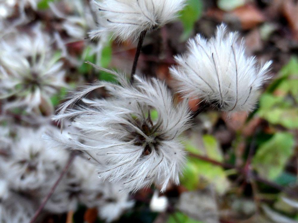 Photo in Nature #flower #zaandam #holland #netherlands