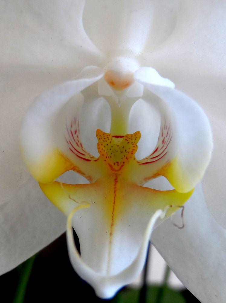 Photo in Macro #orchid #flower #white #orange #warsaw #nature #macro
