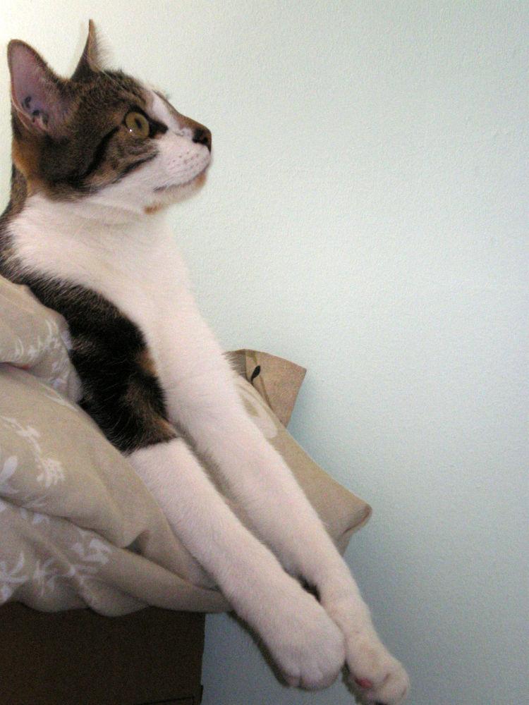 Photo in Animal #cat #relax