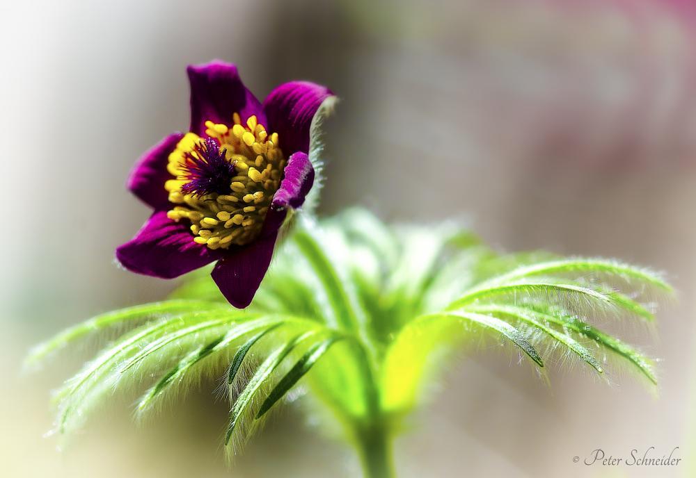 Photo in Macro #tender #flower #natur #plant #macro