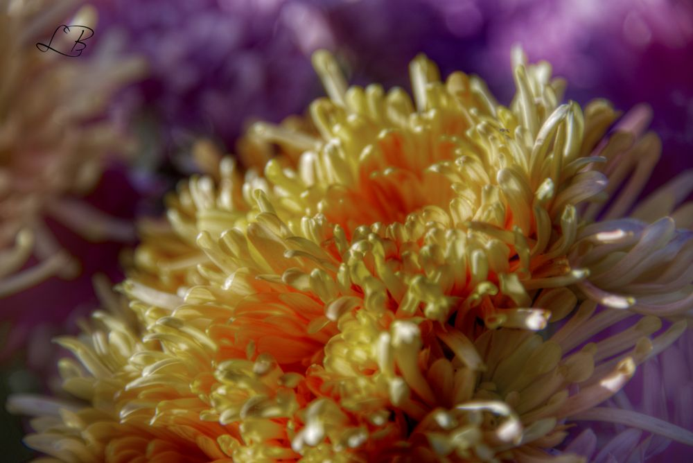 Photo in Random #flowers #yellow #lydie #abstract
