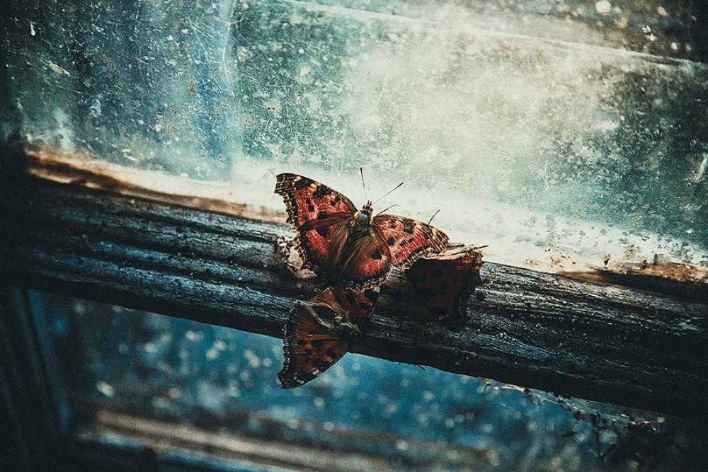 Photo in Random #butterfly #geo arcus #photo #fly #green #window