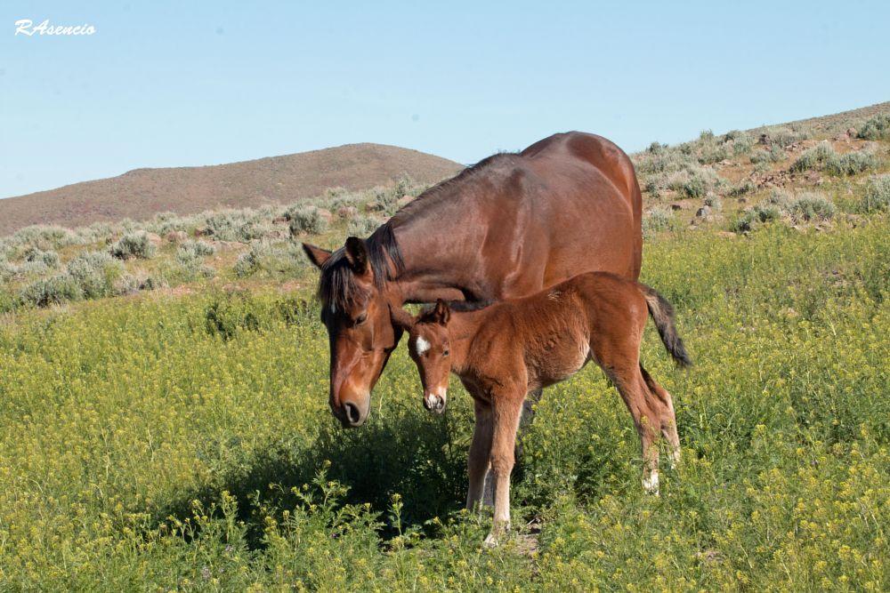 Photo in Nature #horsesanimalswildlife