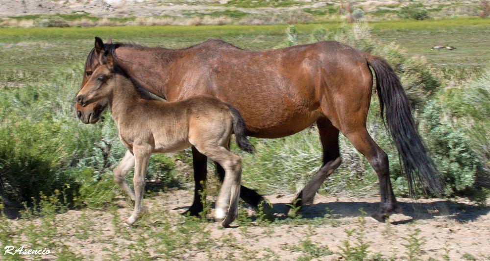 Photo in Nature #horseswildlifeanimals