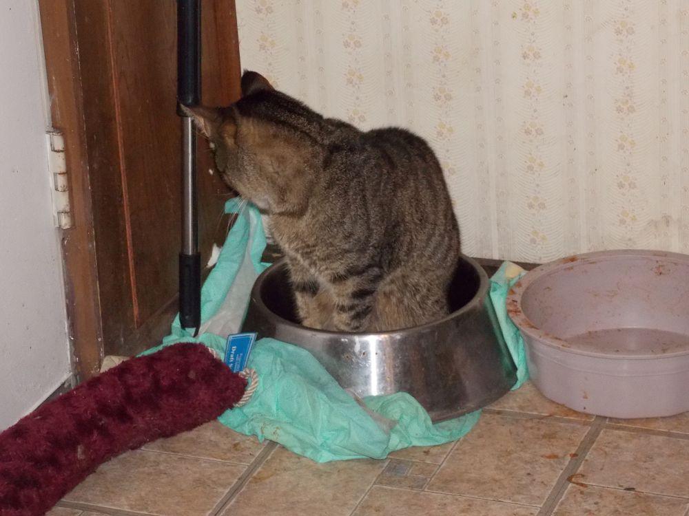 Photo in Animal #feline #cat #cats #animals