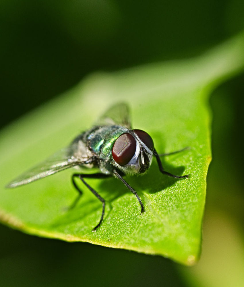 Photo in Macro #macro #fly #insect #closeup #insect . macro