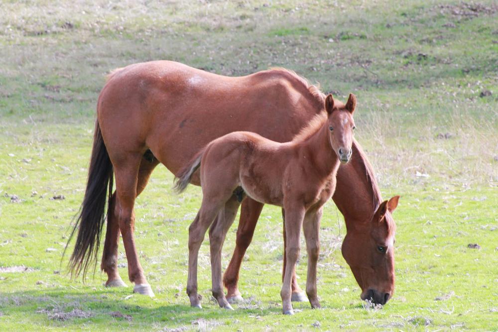 Photo in Animal #colt #horse #feeding #horses #family #hooves #farm
