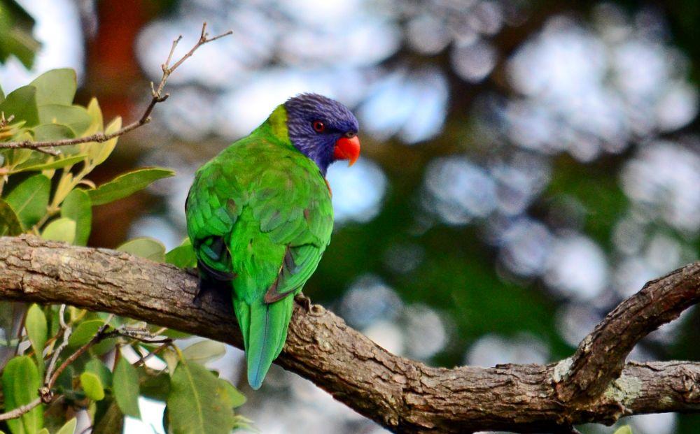 Photo in Animal #animal #nature