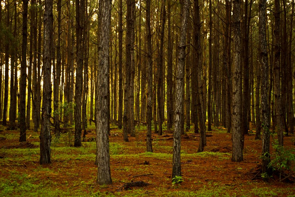 Photo in Landscape #woods #camp weed #wildnerness #trees #episcopal church retreat
