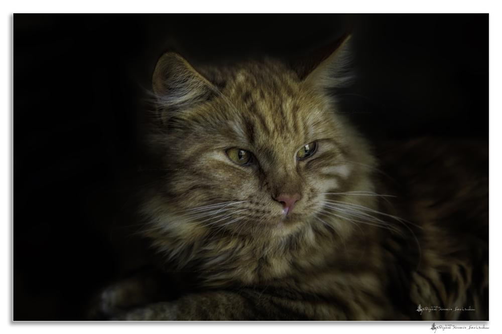 Photo in Animal #cat #nature #wild #photo #close #animals #pet