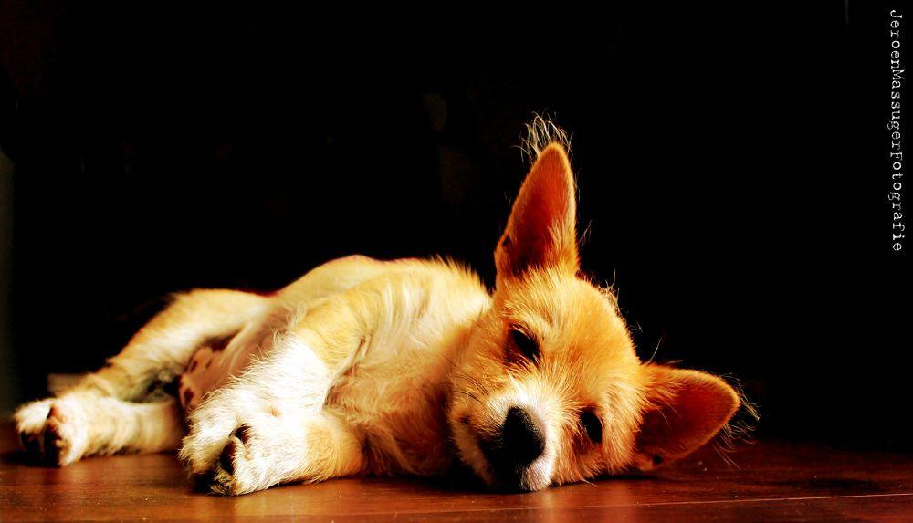 Photo in Random #dog