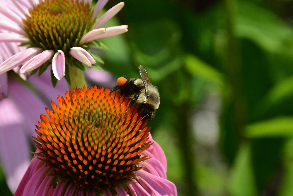 Photo in Random #insects #flowers #haiku